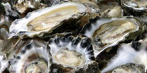 Oysters - an excellent source of dietary zinc